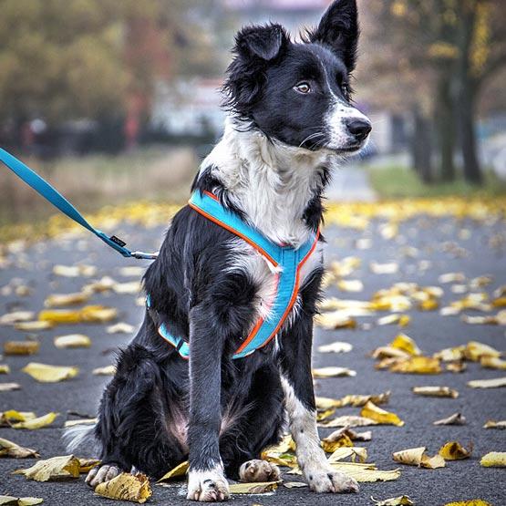 Hondentuigen-op maat